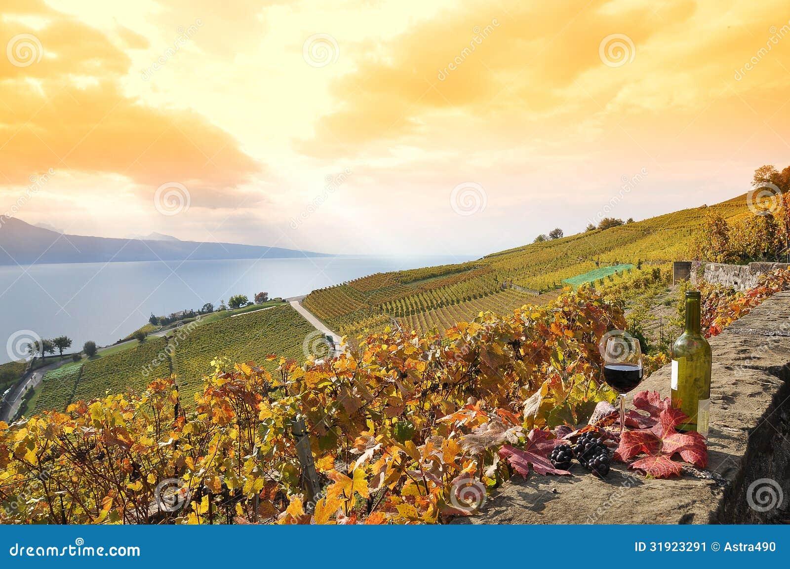 Région De Lavaux Suisse Image Stock Image Du Genève 31923291