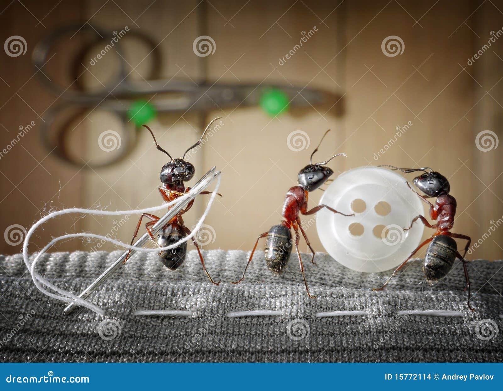 Réglez la fourmi et l équipe des fourmis cousant l usure