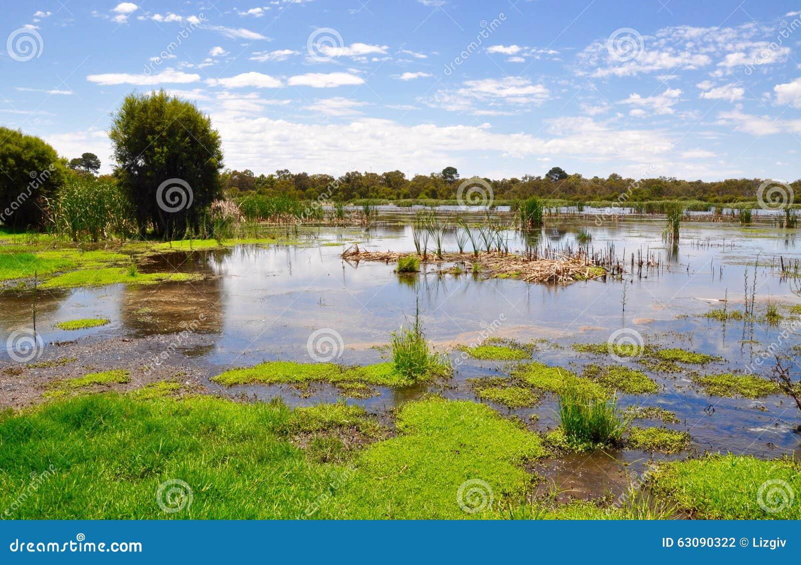 Download Réservation De Marécage Dans L'Australie Occidentale Photo stock - Image du nuages, centrales: 63090322