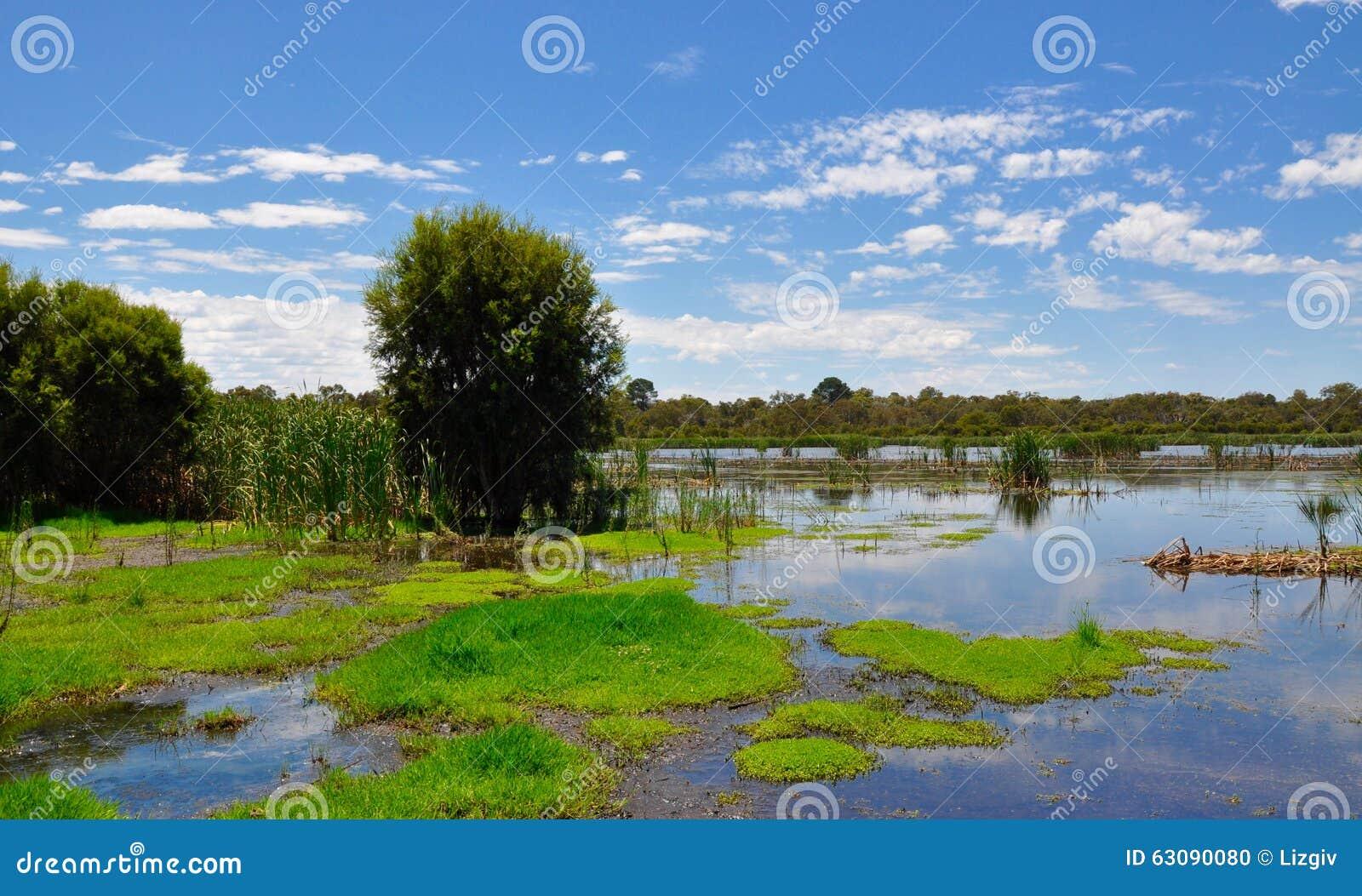 Download Réservation De Marécage De Beelier, Australie Occidentale Photo stock - Image du wispy, nature: 63090080