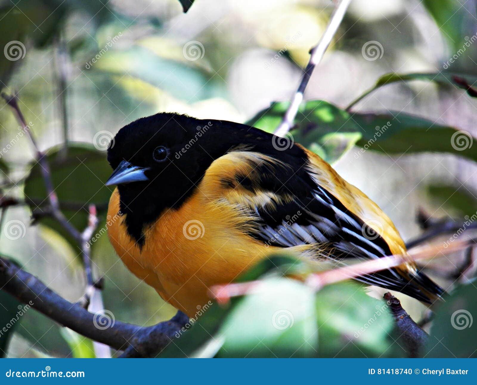 Réserve d oiseaux de l Ohio à Mansfield, Ohio