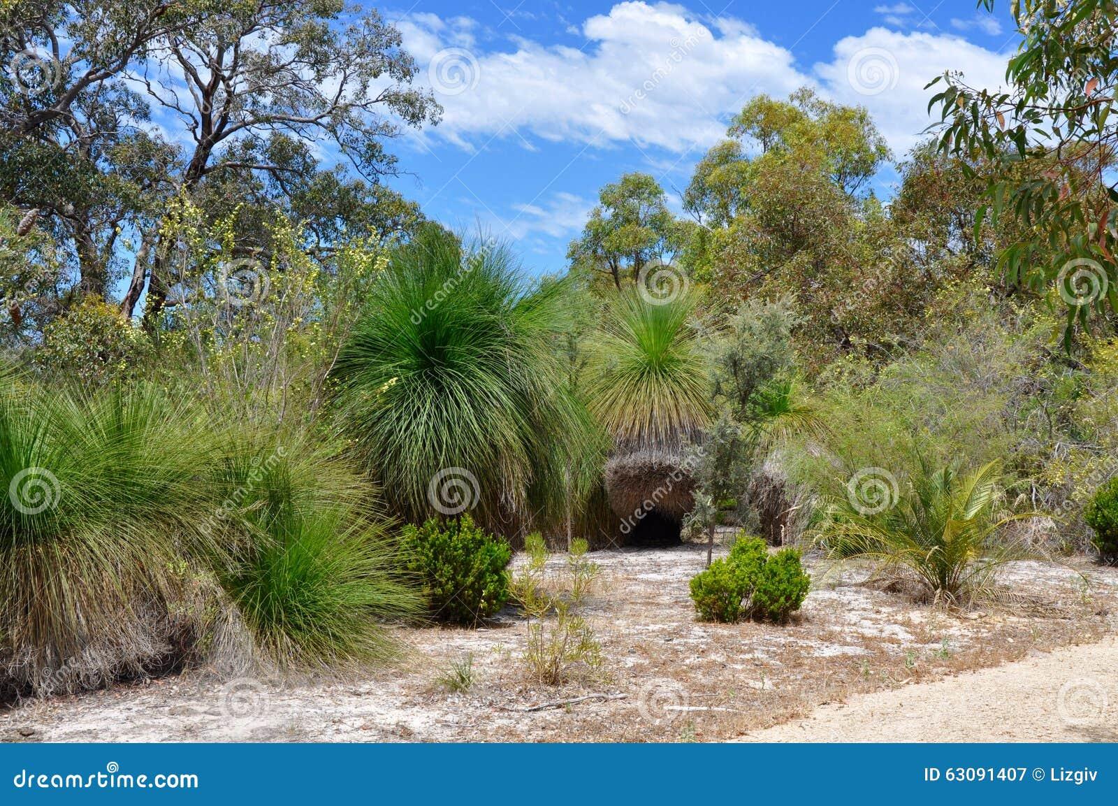 Download Réserve Naturelle Australienne : Arbres De Yakka Image stock - Image du avec, buisson: 63091407