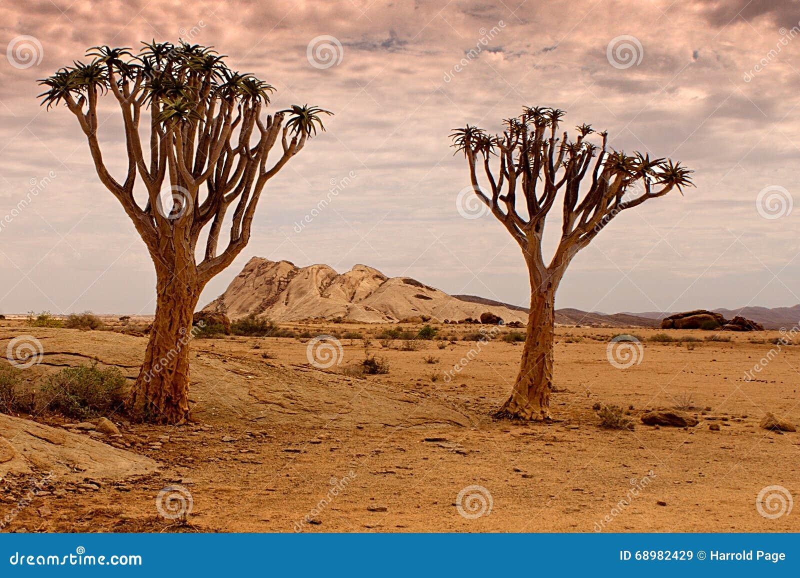 Réserve naturelle de Naukluft, désert de Namib, Namibie
