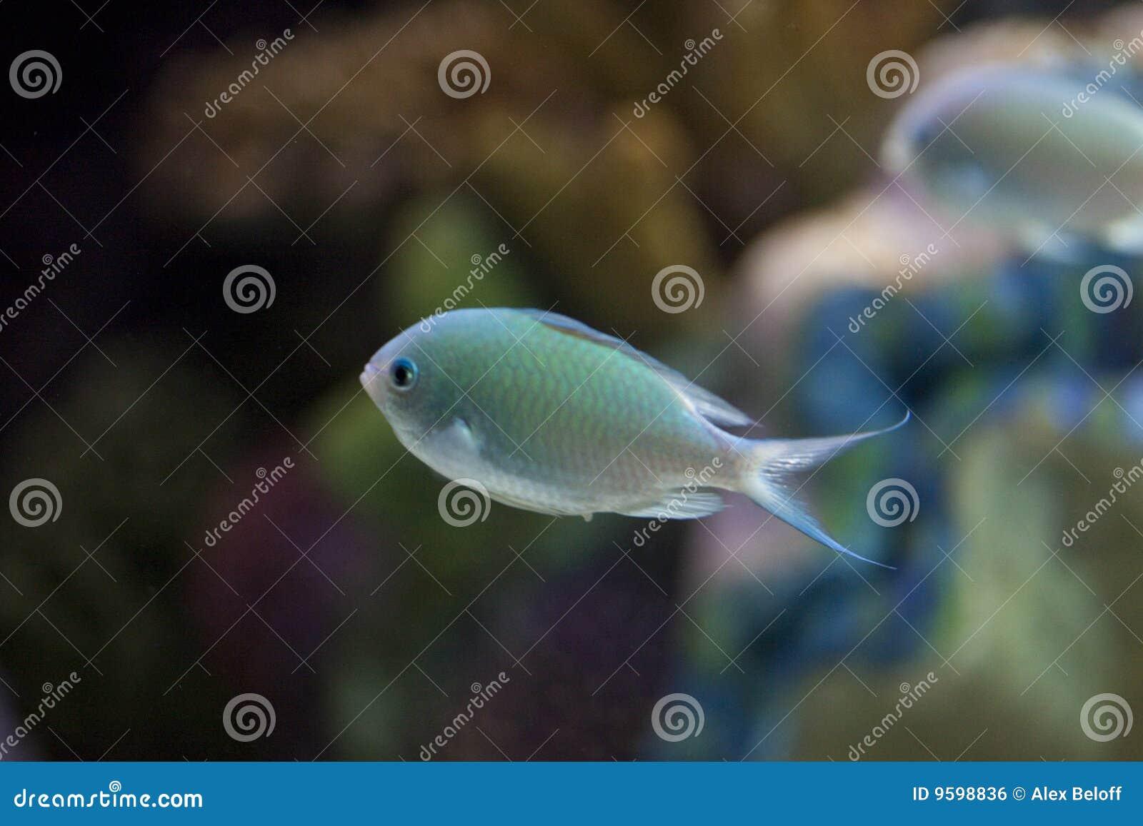 Réservoir de poissons exotique
