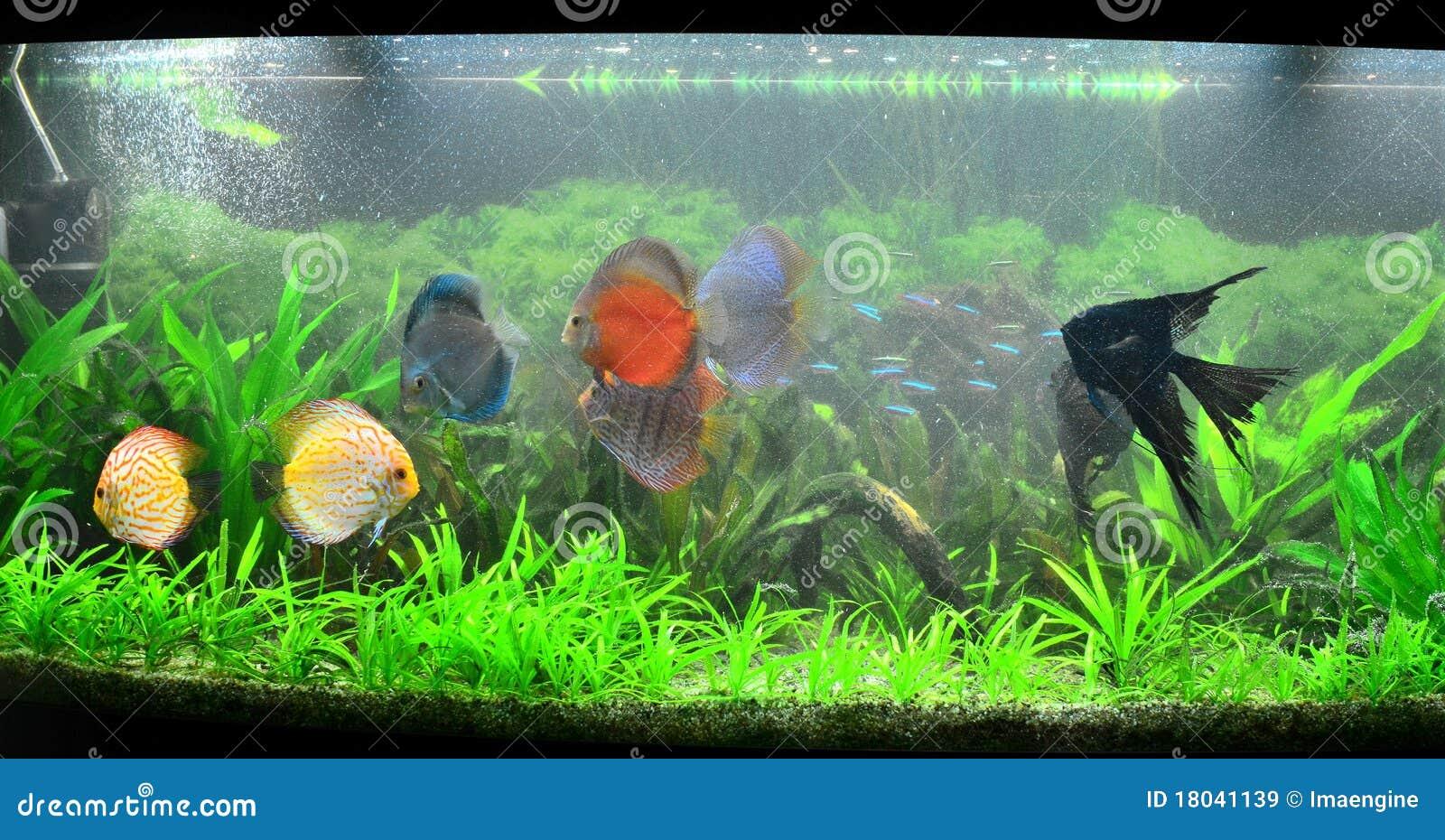 r servoir de poissons exotique aquarium amazonien image stock image 18041139. Black Bedroom Furniture Sets. Home Design Ideas