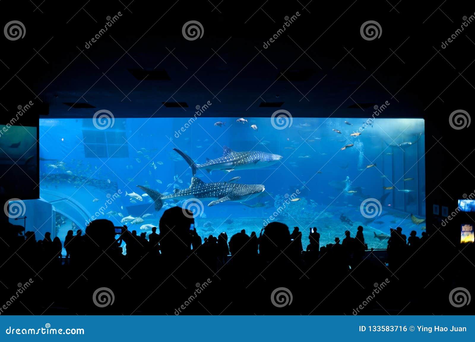 Réservoir principal chez Okinawa Aquarium