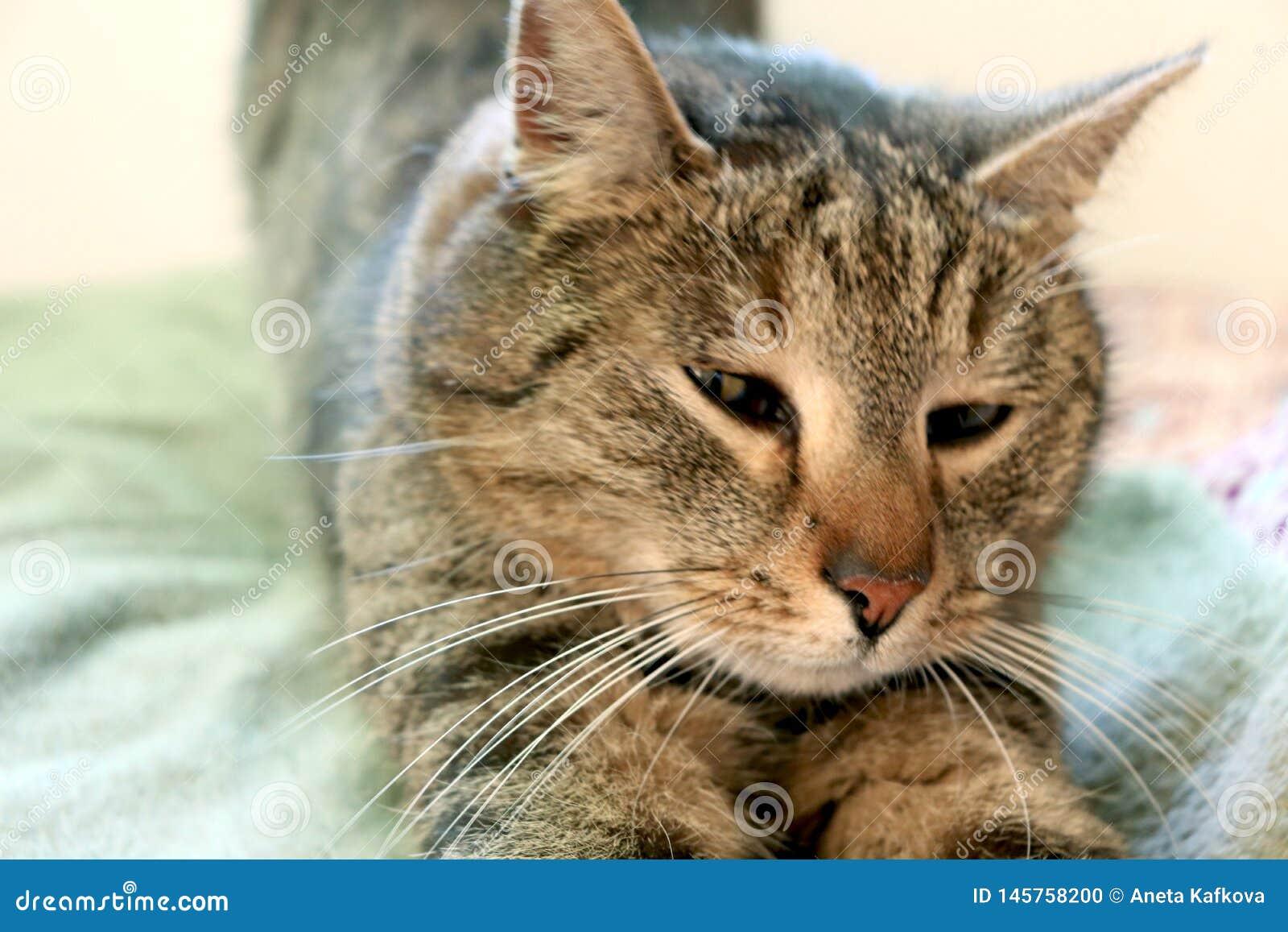Réveiller juste le beau chat