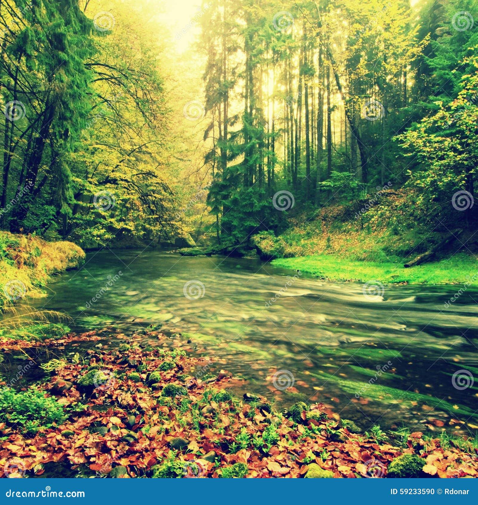 Río de la montaña con bajo del agua, de la grava con la haya colorida, del álamo temblón y de hojas de arce Piedras y cantos roda