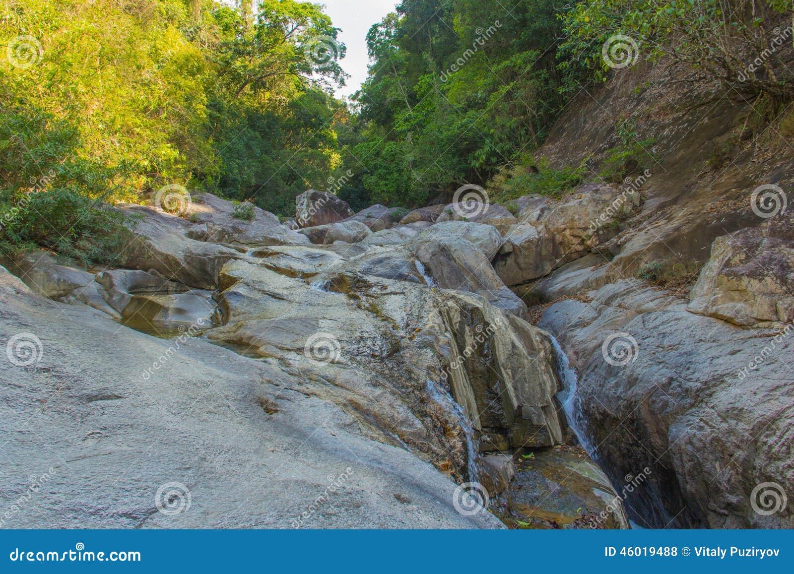 vietnamita mojado