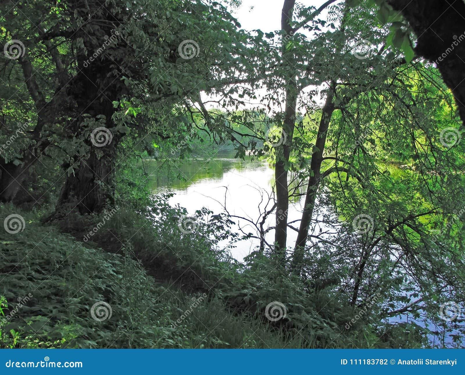 Río ocultado para las ramas de árboles