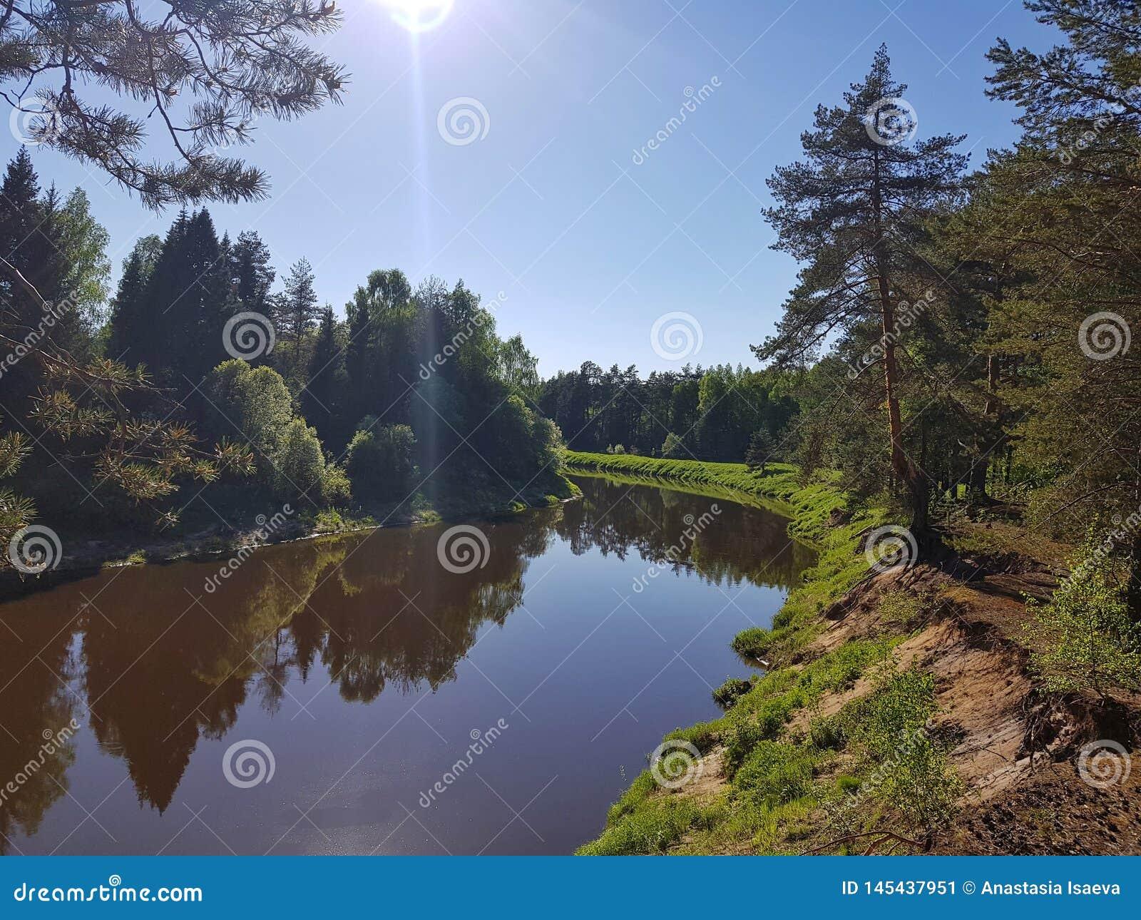R?o salvaje en el bosque de la plantaci?n de pi?as el la primavera con el sol Escena hermosa del aire libre de la naturaleza