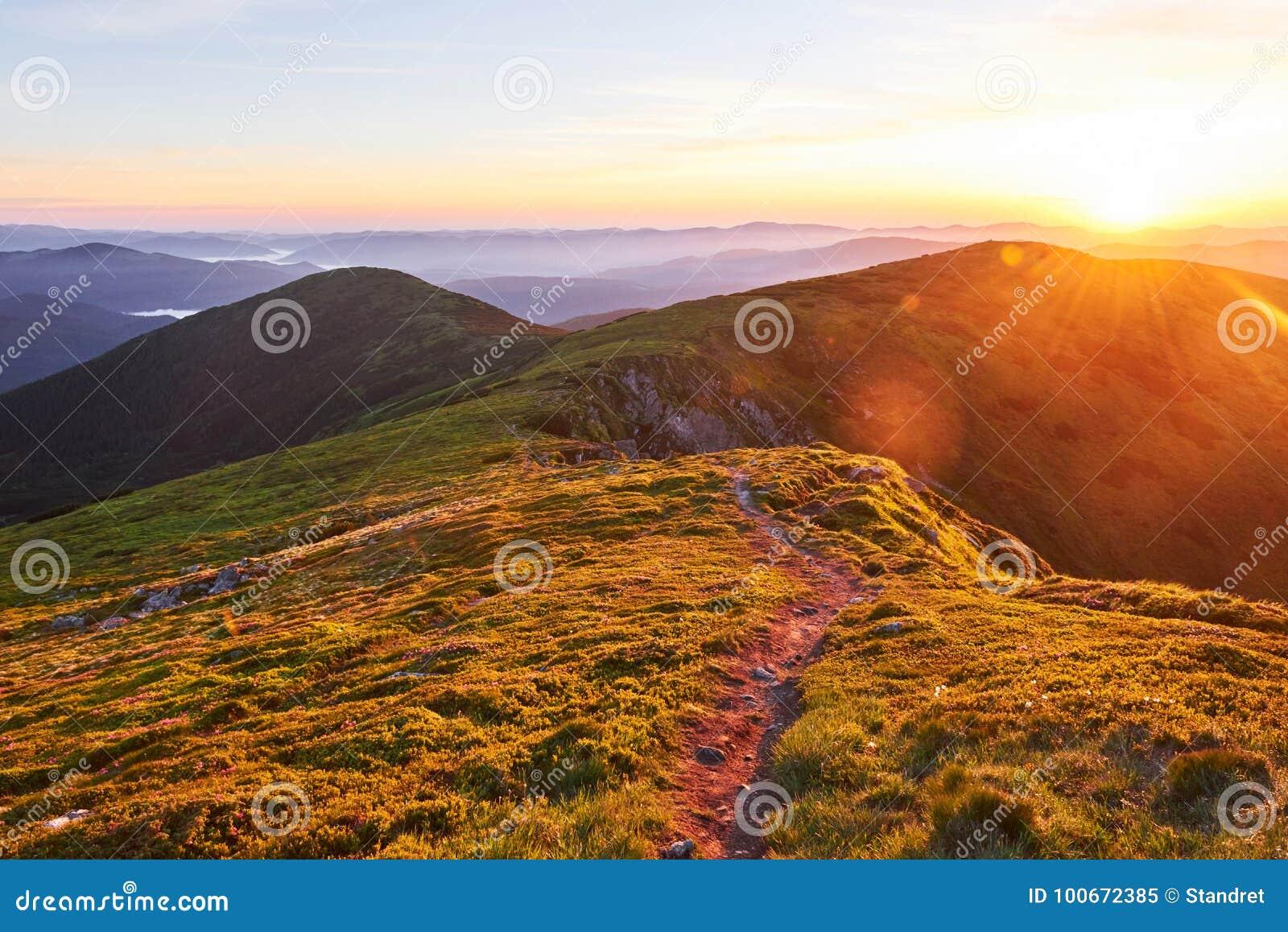 Różaneczniki kwitną w pięknej lokaci w górach piękny zachód słońca Kwitnący różaneczniki w górach