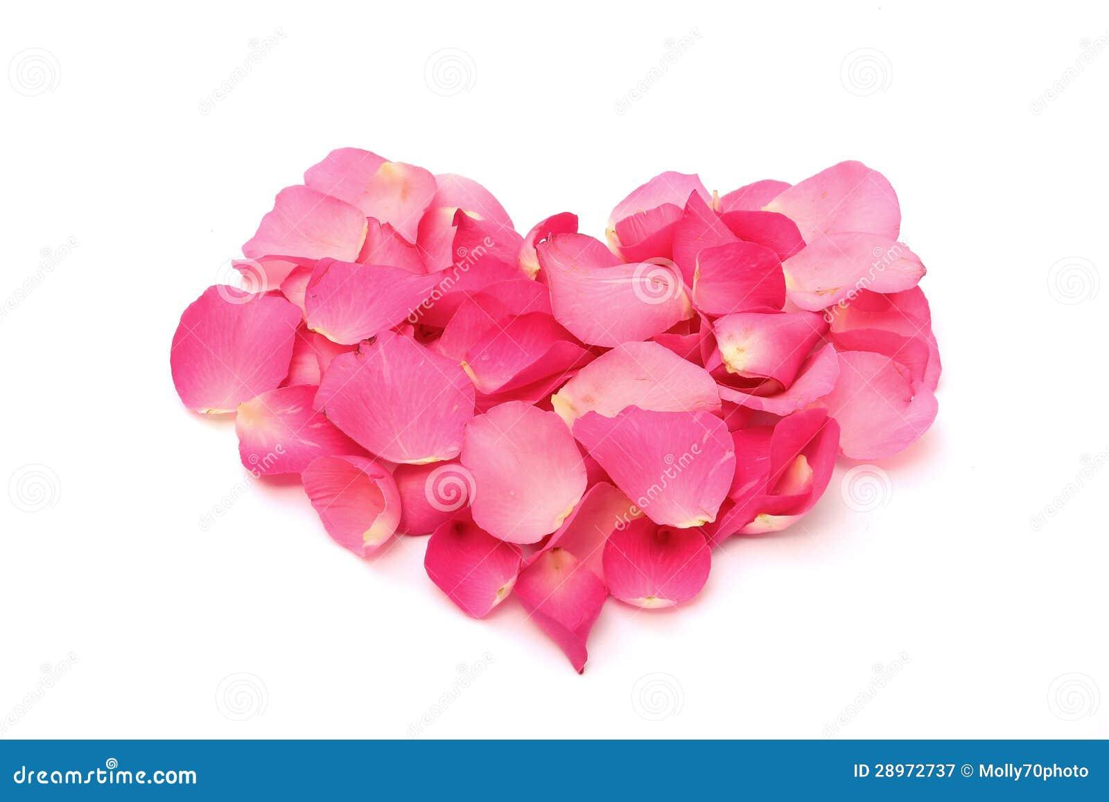 Różani płatki w postaci serca na bielu