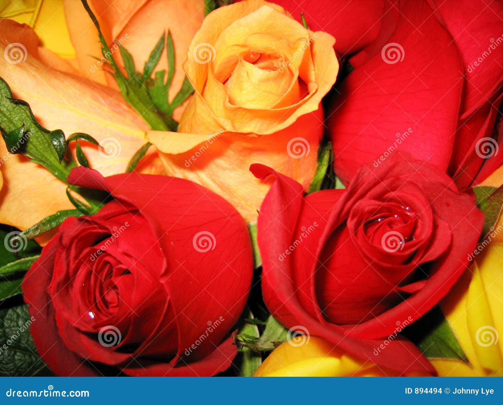 Róże łóżkowe