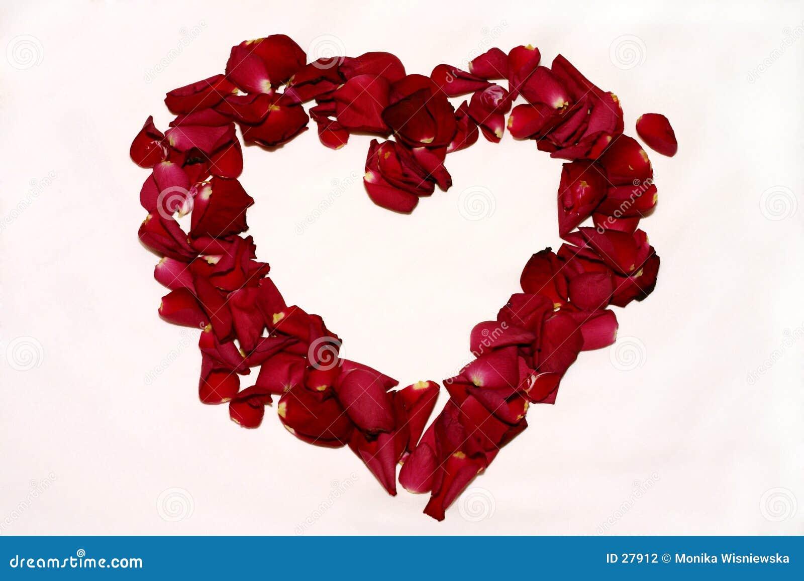 Róże miłości.