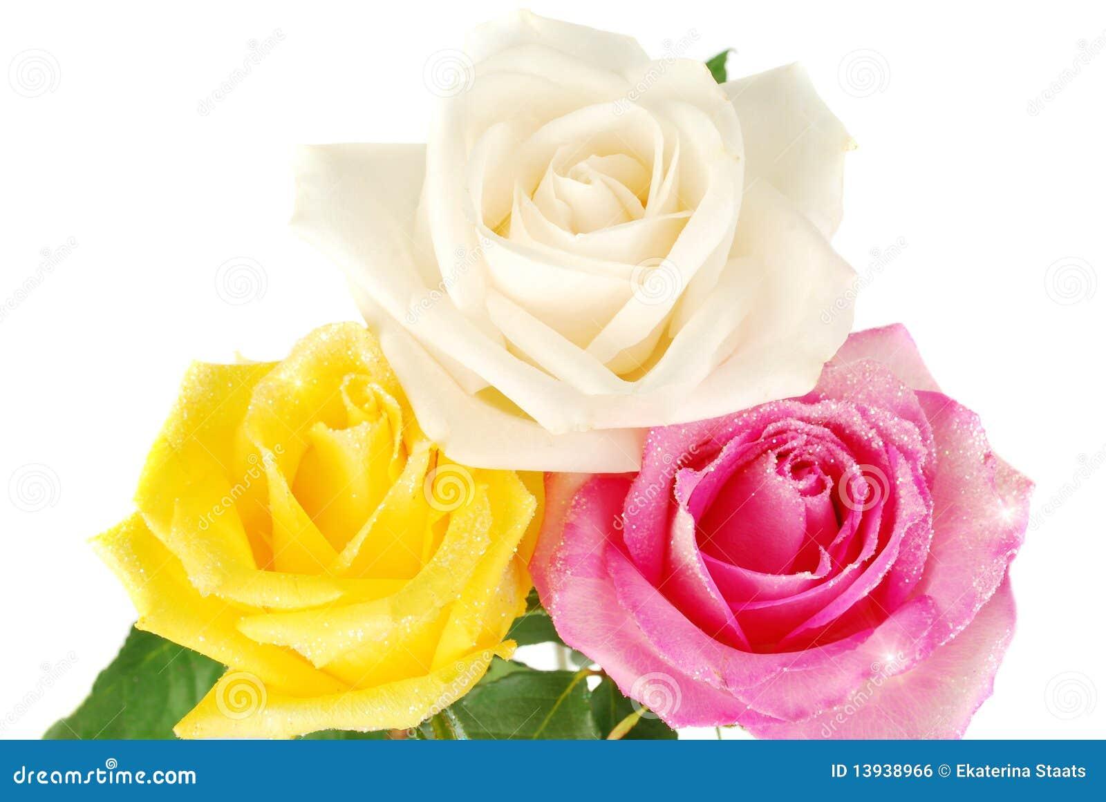 Róże trzy