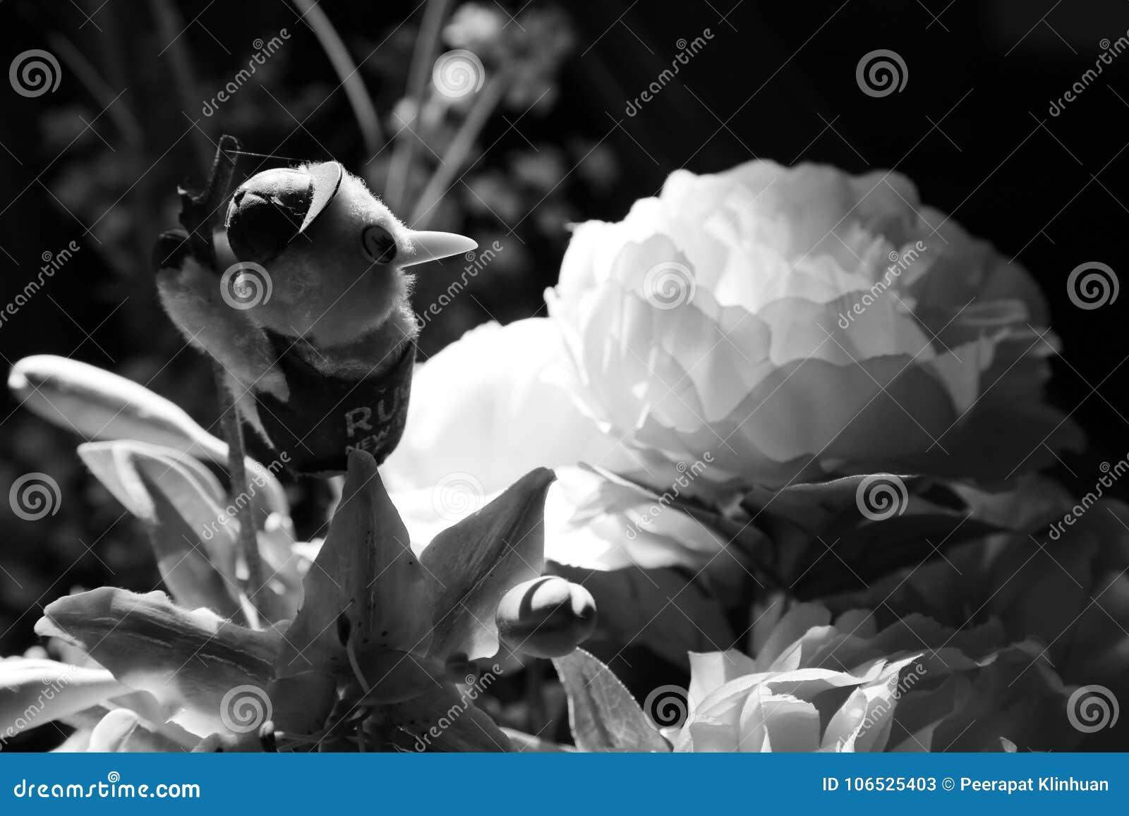 Różni kwiatów środki które przychodzili out