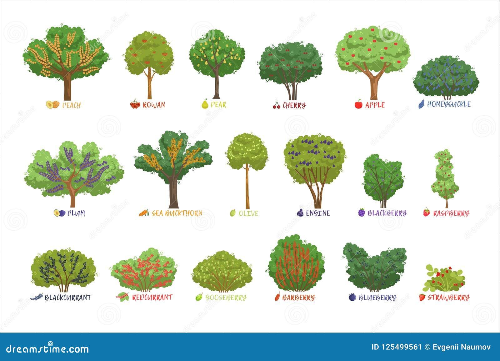 Różni ogrodowi jagodowi krzaków rodzaje z imionami ustawiają, owocowi drzewa i jagodowe krzaka wektoru ilustracje