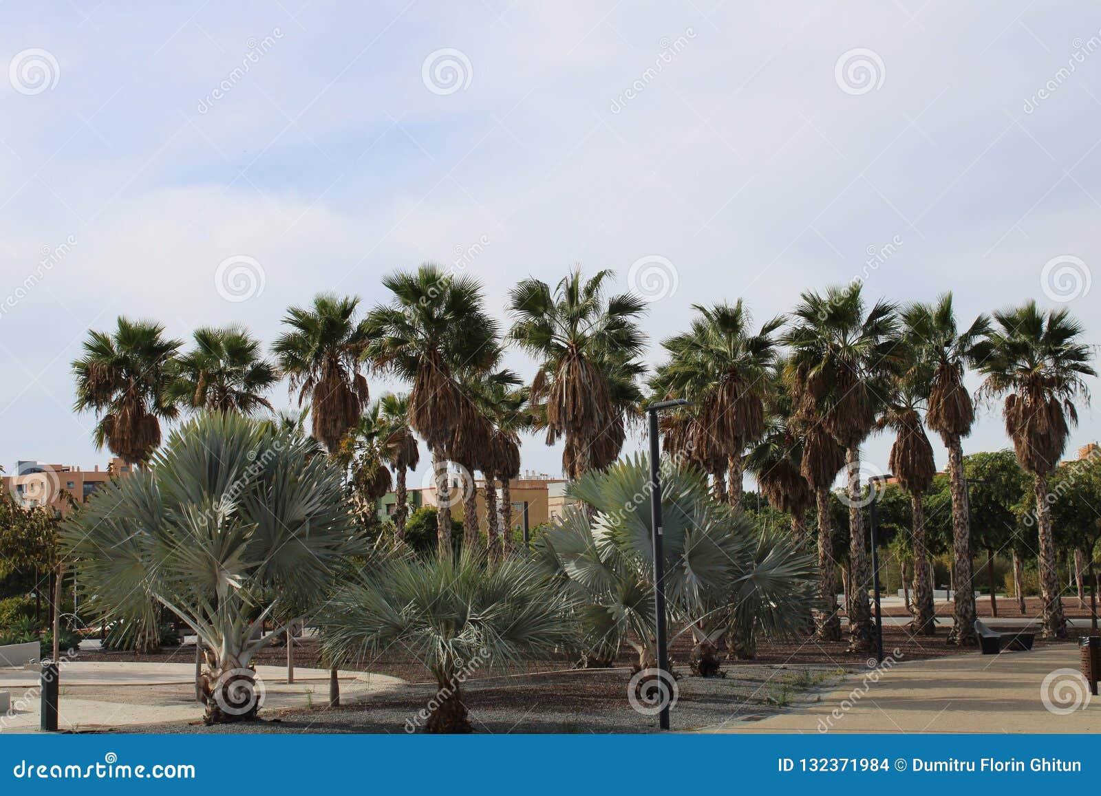 Różni typ drzewka palmowe