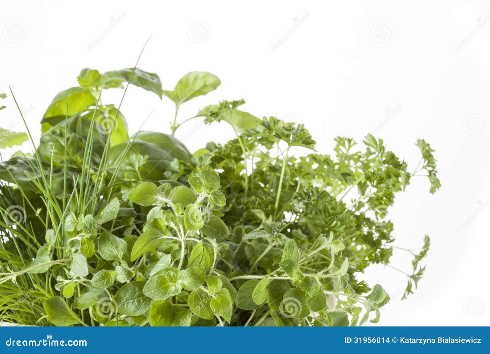 Różnorodni ziele
