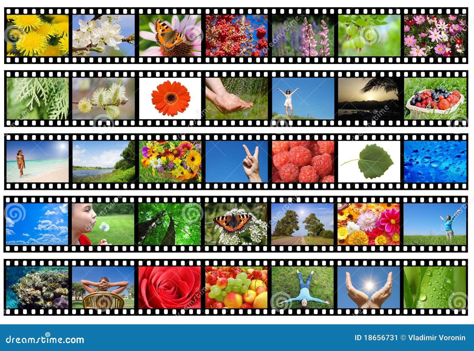 Różny ekranowy życia natury fotografii pasek