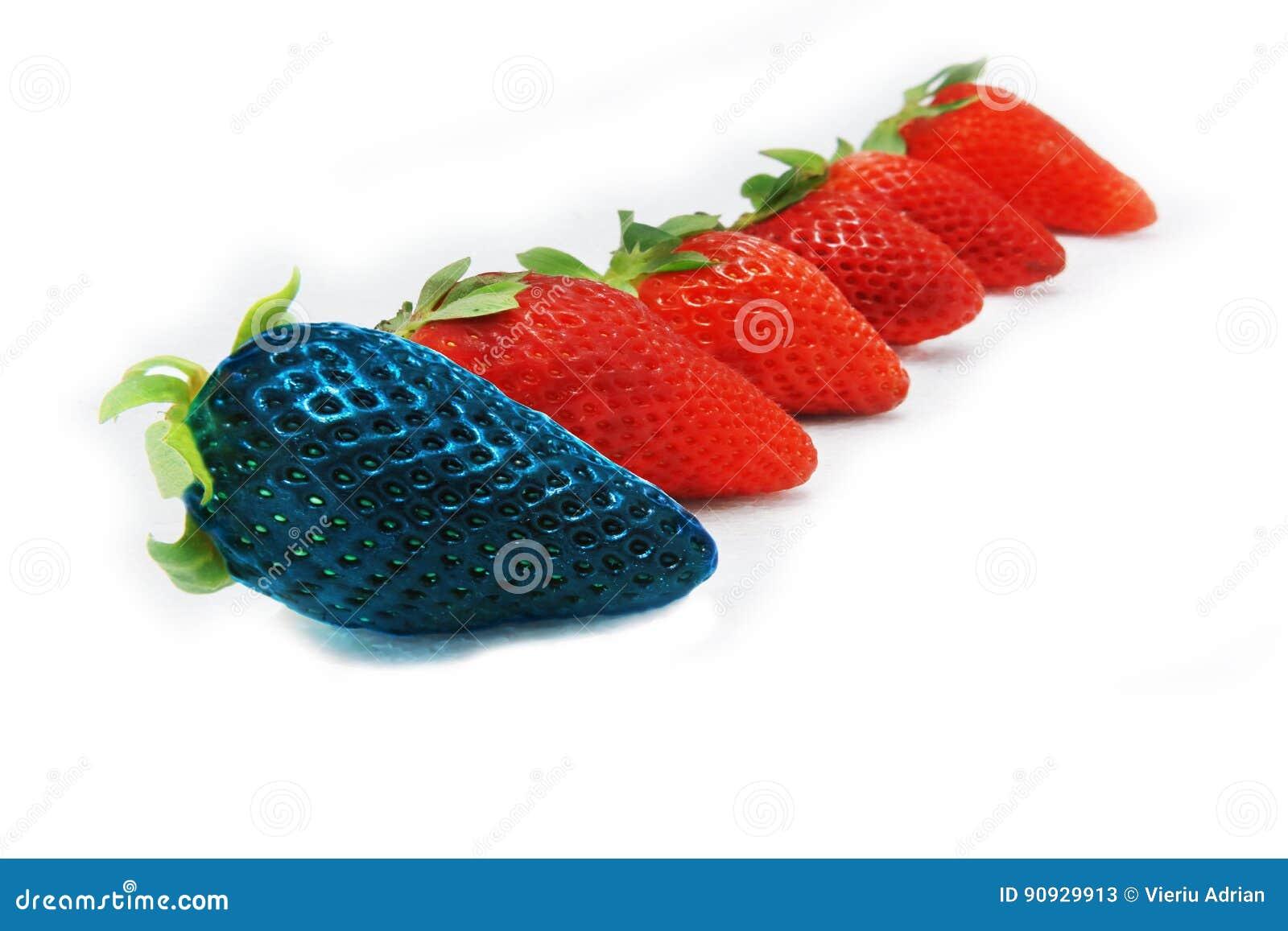 Różny niż spoczynkowej samotnej błękitnej truskawki Pojęcie dla genetycznie zmodyfikowanego jedzenia