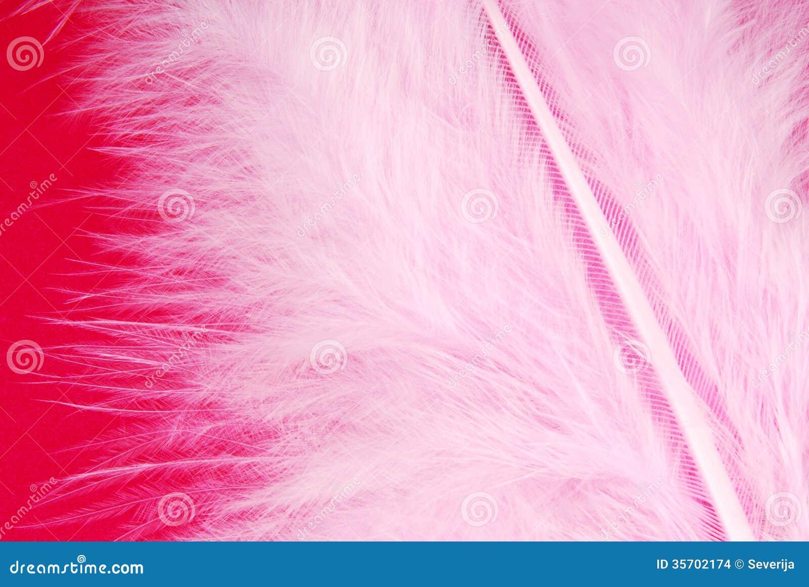 Różowa piórkowa upierzenie tekstura