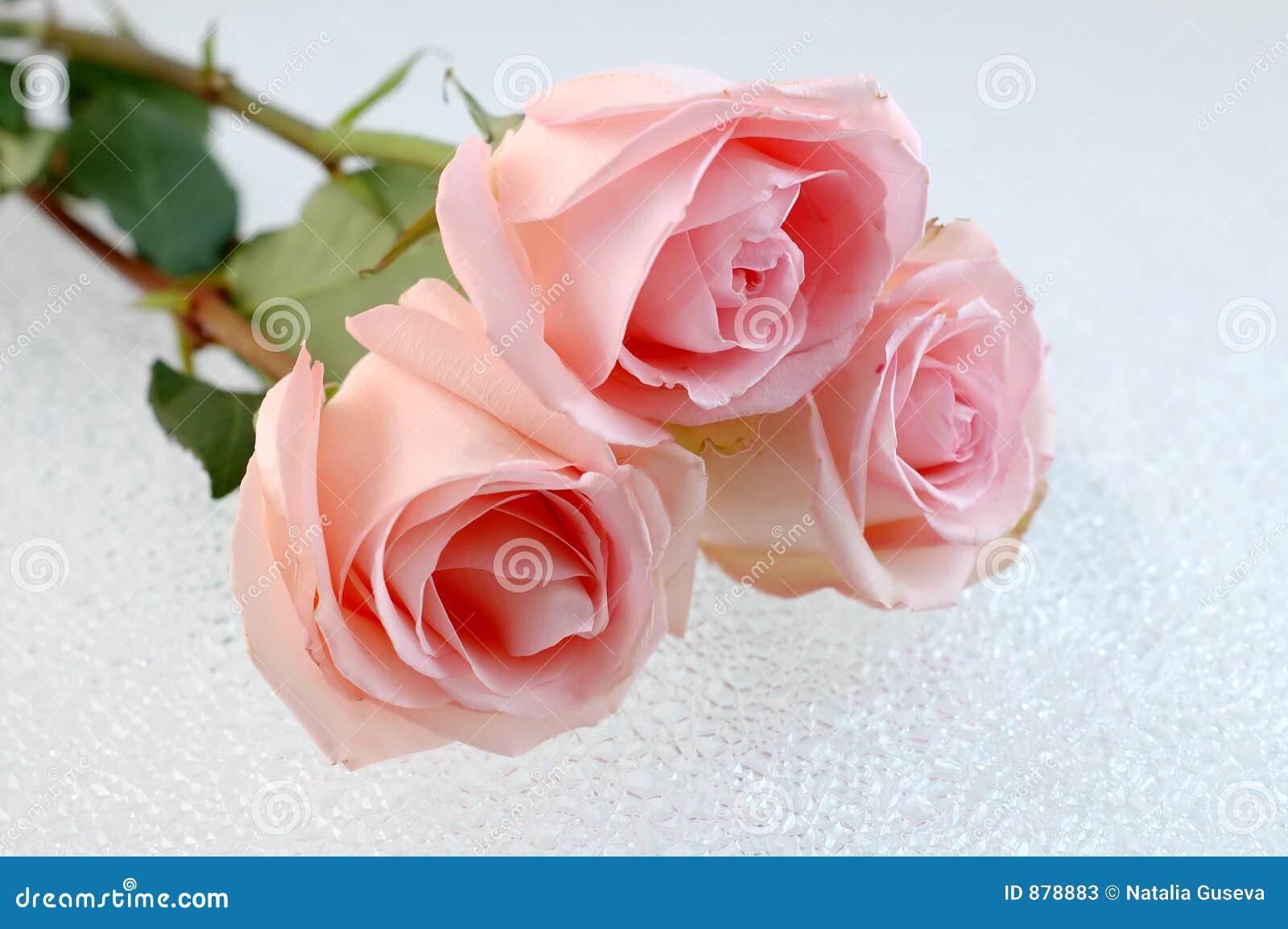 Różowe róże 3