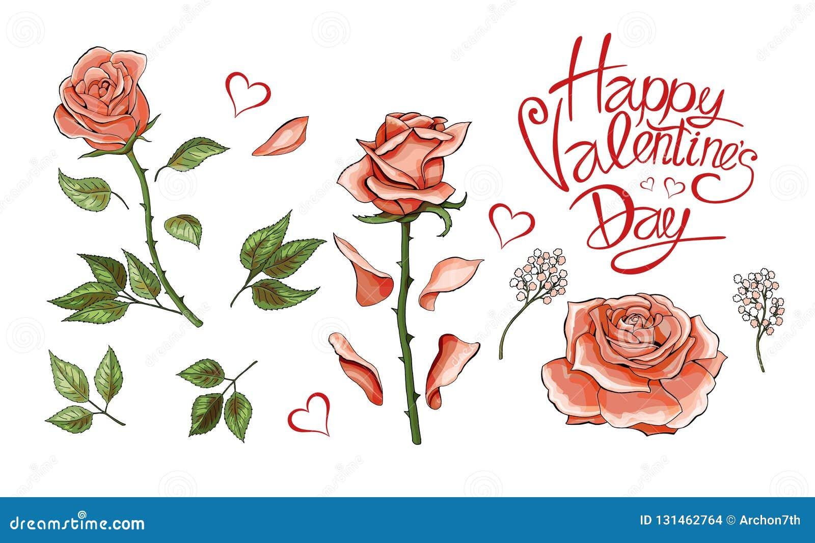 Różowe róże wręczają patroszeni ilustracyjni elementy barwiącego set