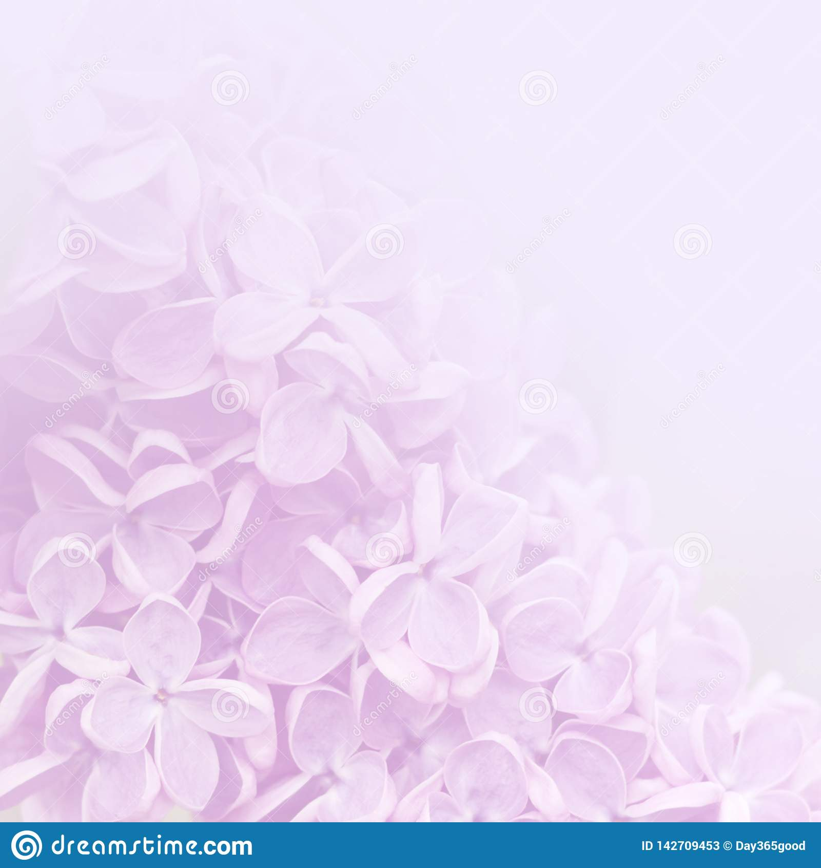 Różowy tło lili kwiaty
