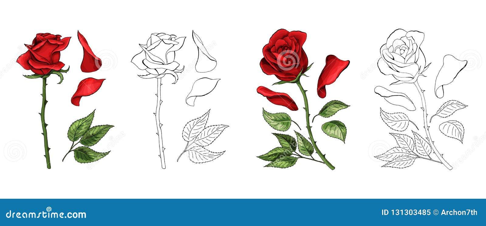 Róży ręki rysunek i barwiący Kwitnie rosebud również zwrócić corel ilustracji wektora