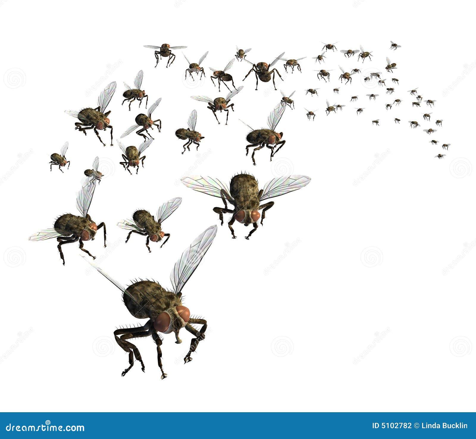 Rój muchy