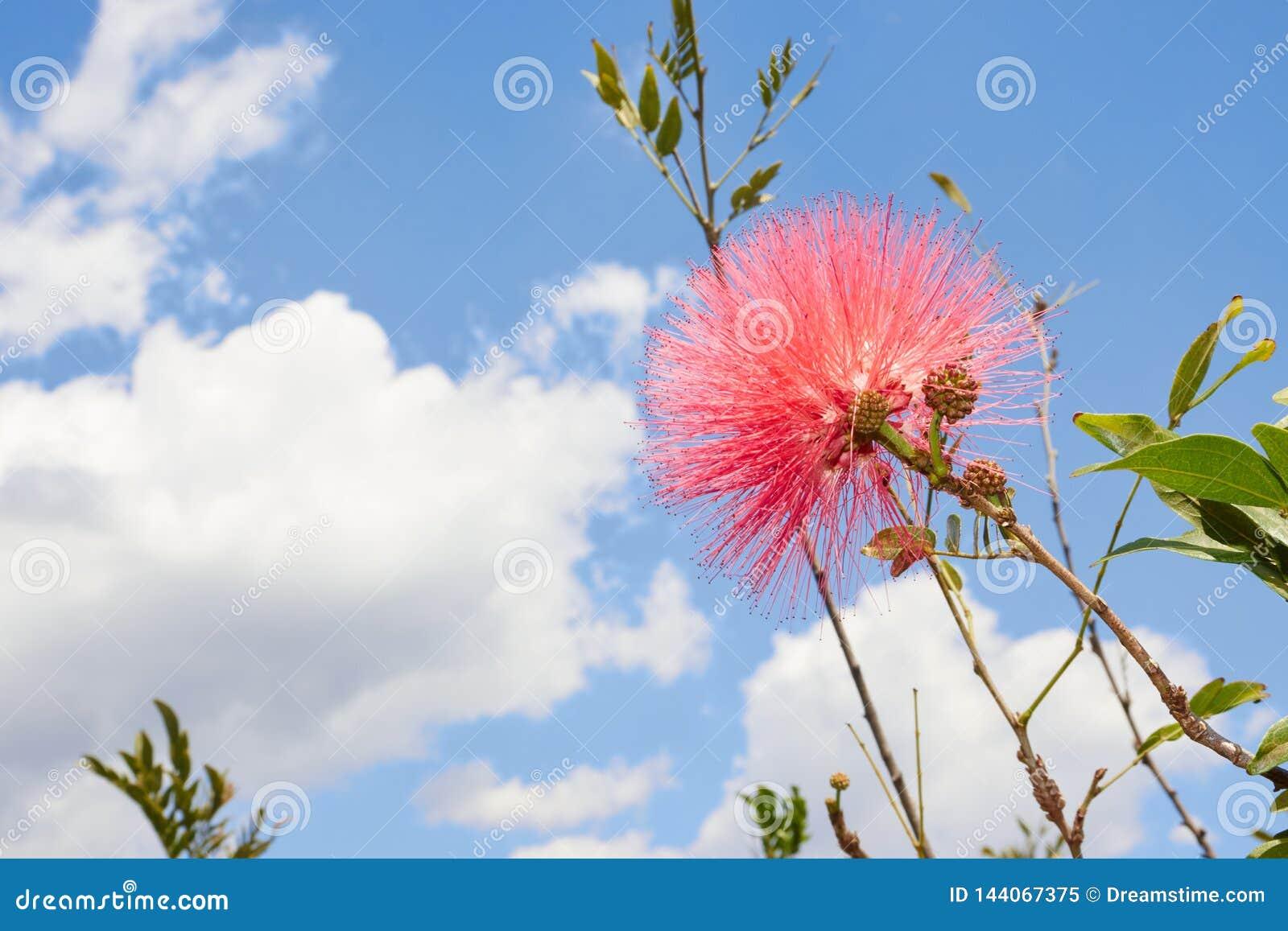 Röd blomma med en kontrast för blå himmel
