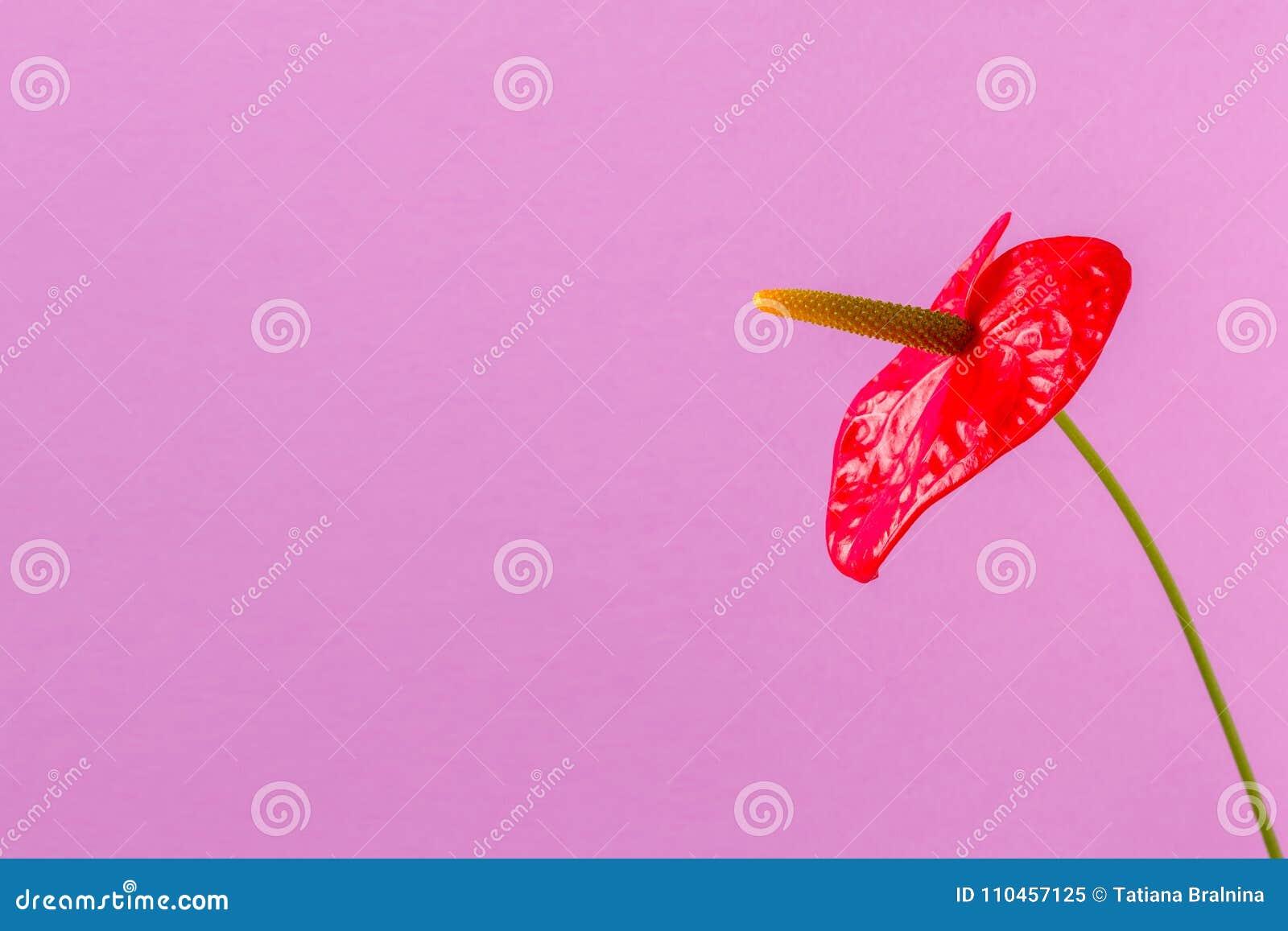 Röd blomma på en ljus kulör bakgrund