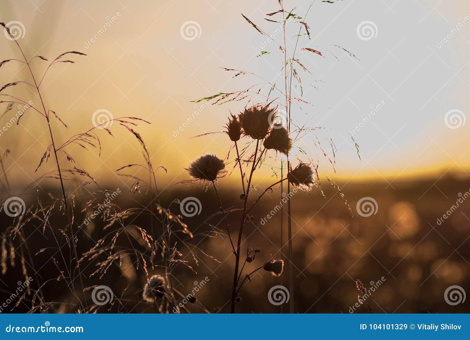 Röd-ellow solnedgång för päls- törnenaturhöst