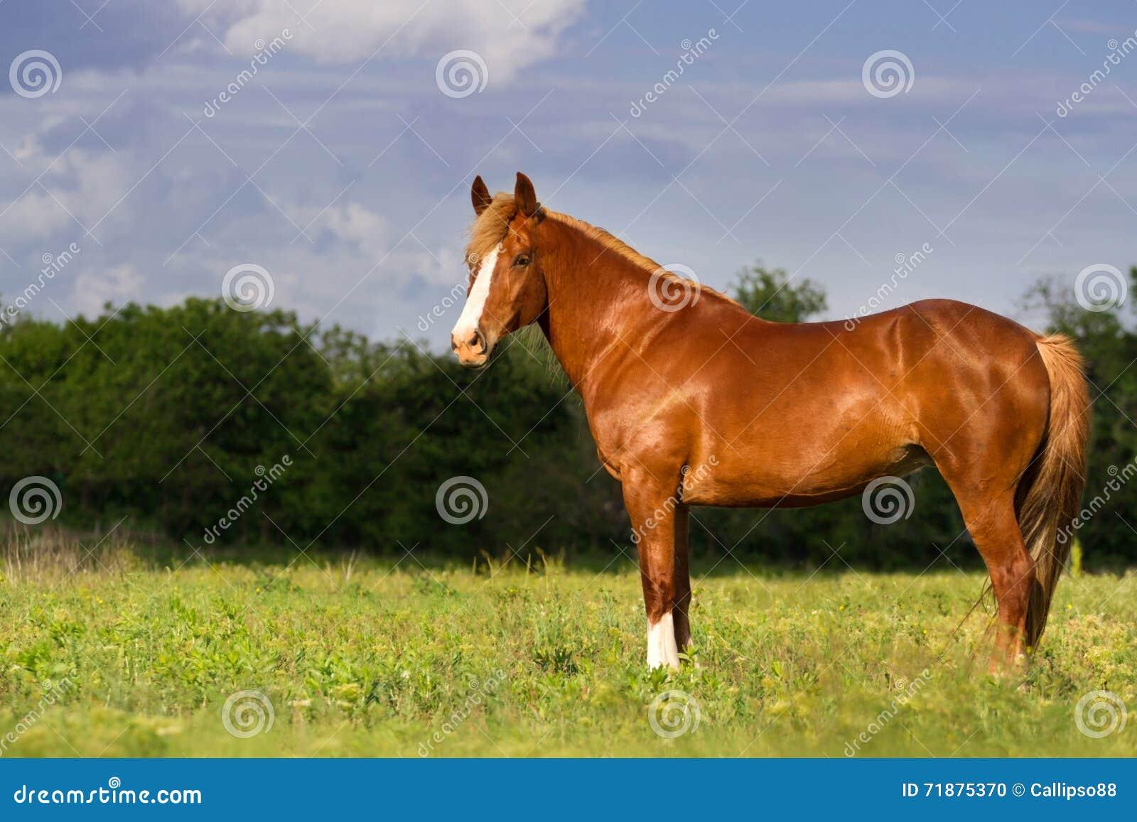 Röd hästkörning