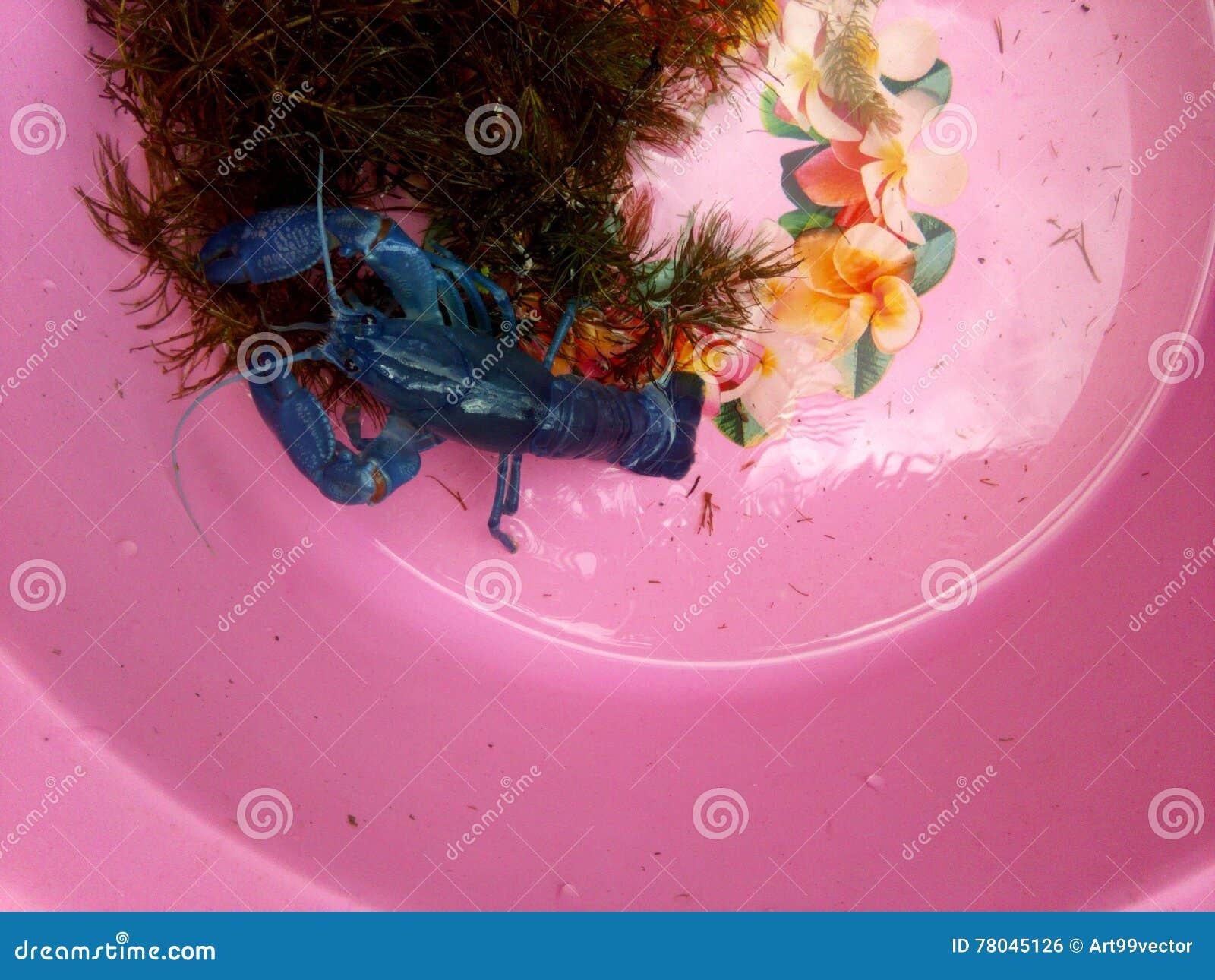 Röd jordluckrarekrävafisk