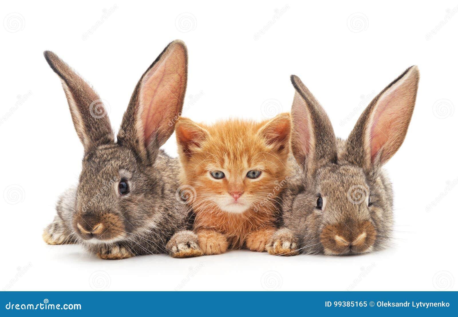 Röd kattunge och kaniner