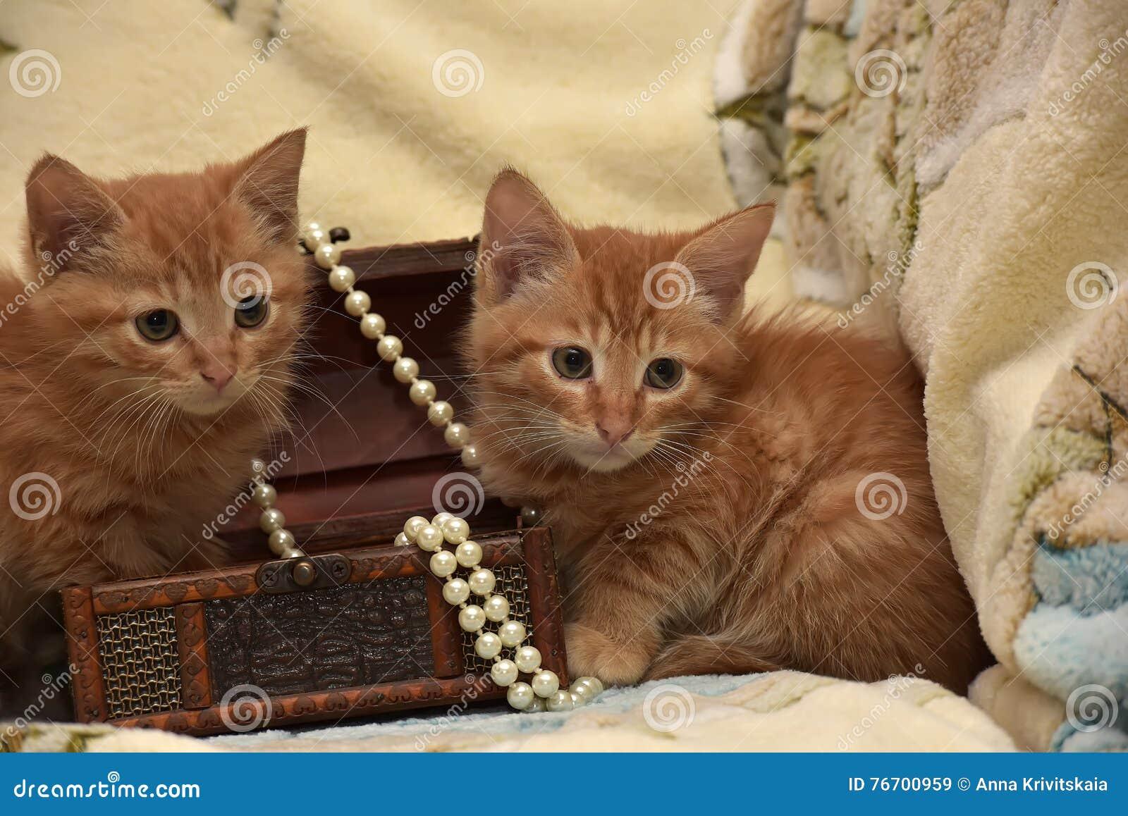 Röd kattunge två