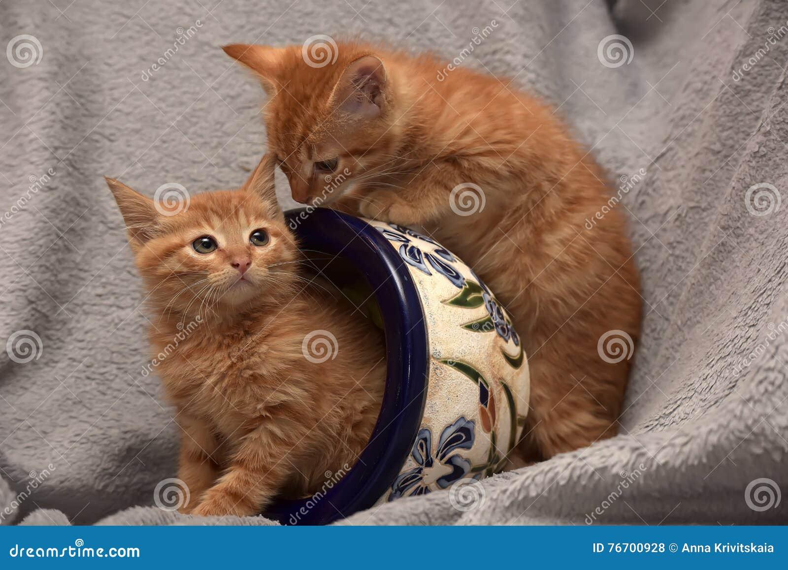 Röd kattunge två och en blomkruka