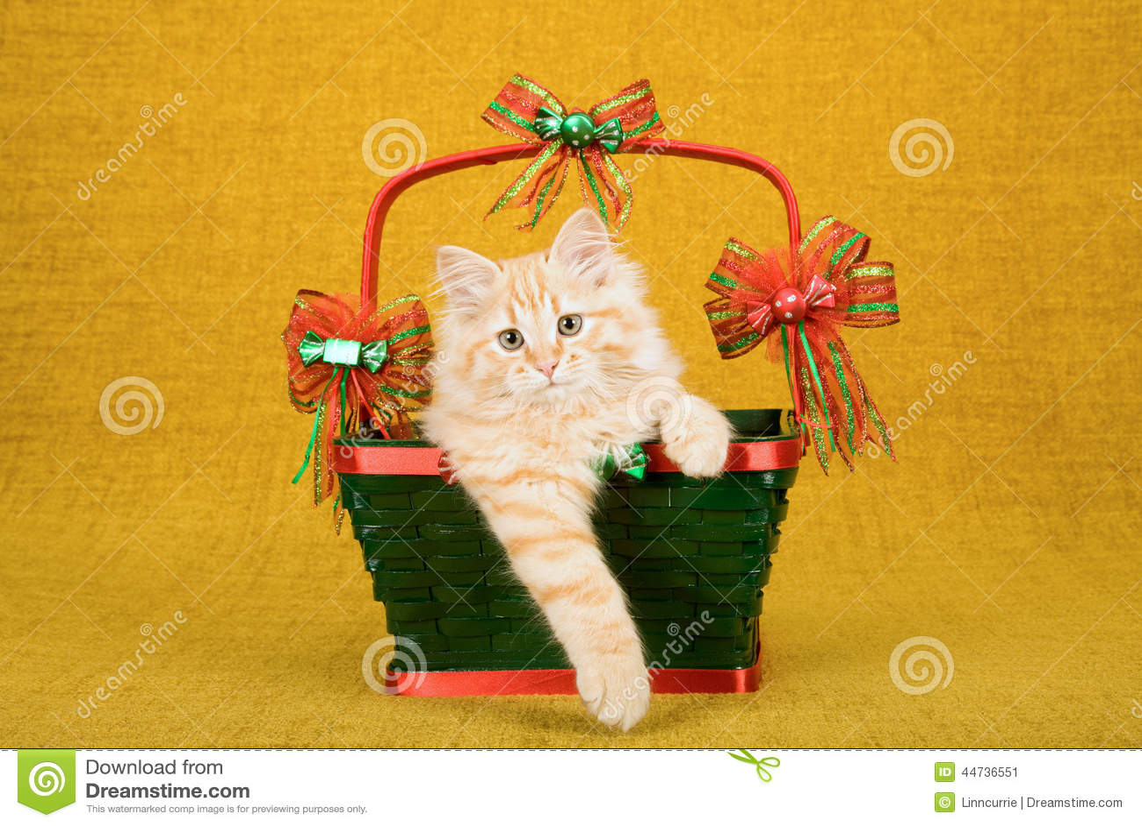Röd korg för jul för gräsplan för insida för Tabby Siberian Forest Cat kattungesammanträde på guld- bakgrund