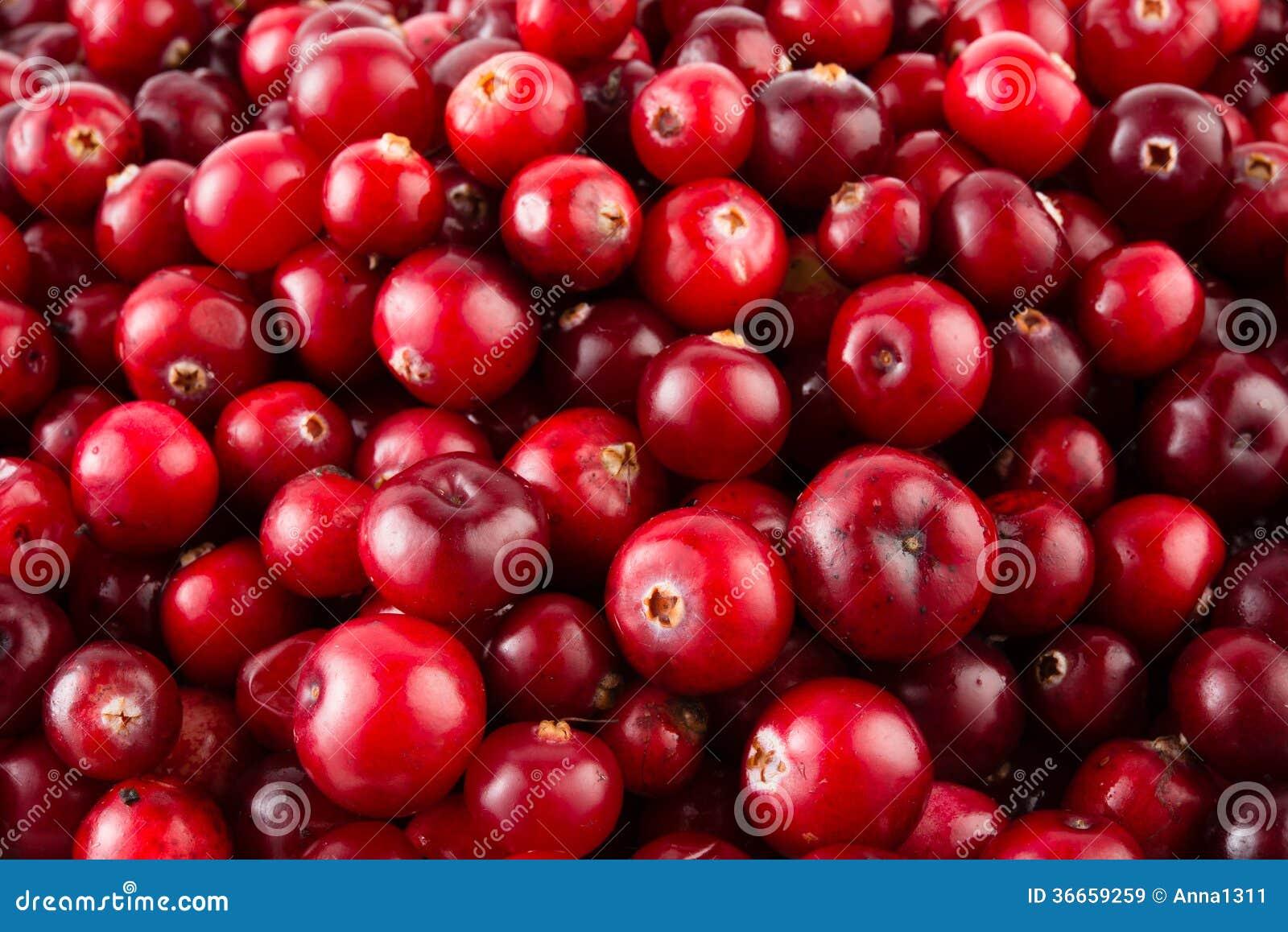 Röd mogen tranbärbakgrund