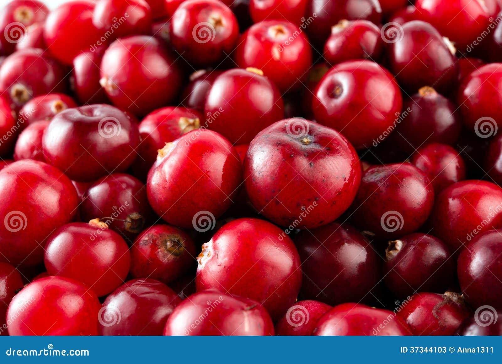 Röd mogen tranbärmakro.