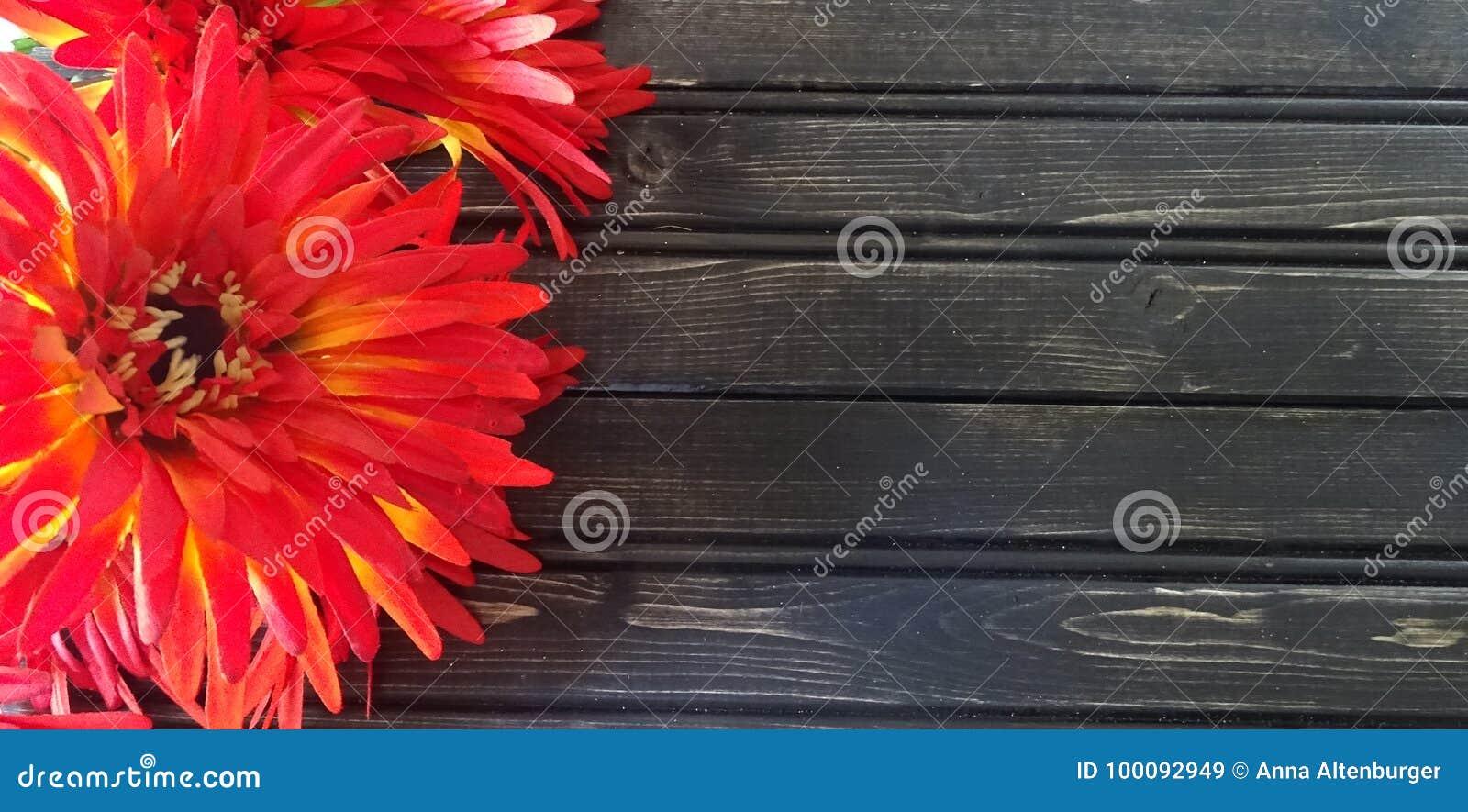 Röd mor med träbakgrund