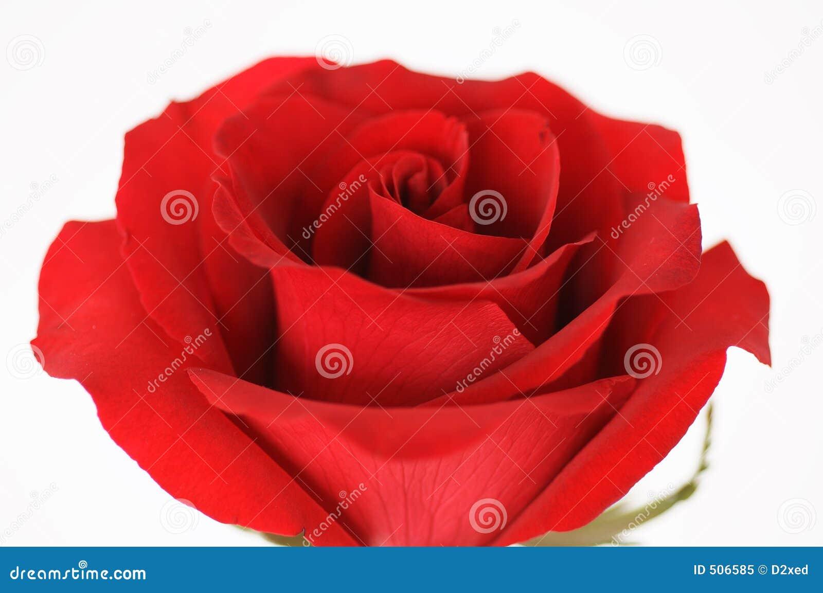 Röd rovalentin