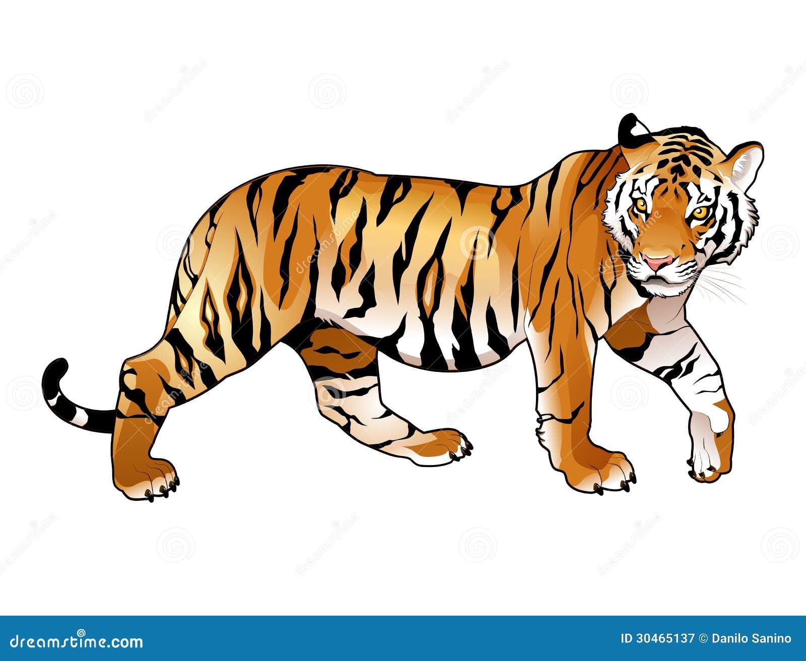 Röd tiger.