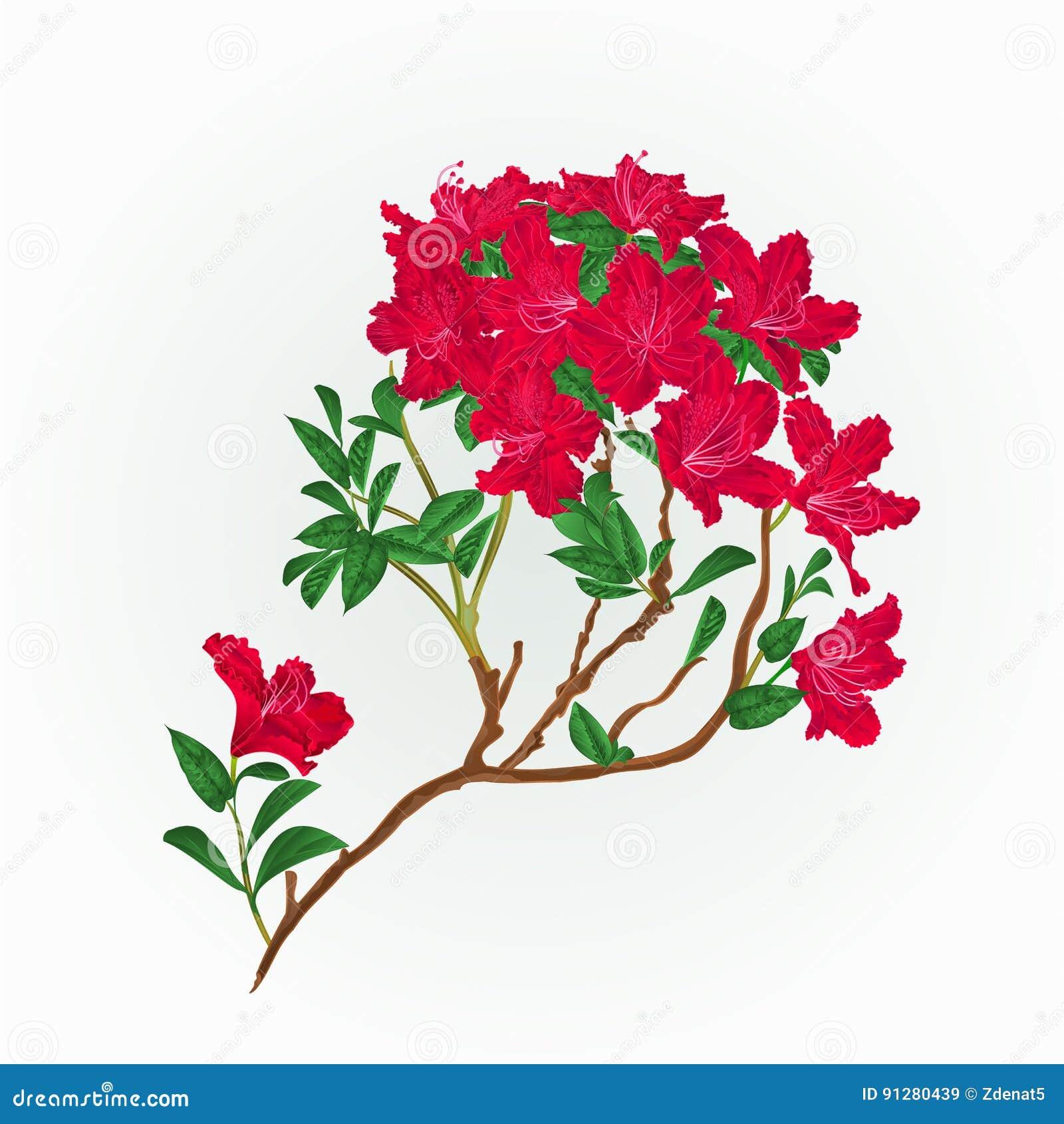 Röd vektor för rhododendronfilialtappning