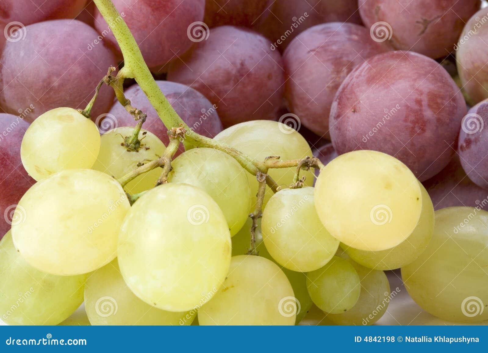 Röd white för druvor