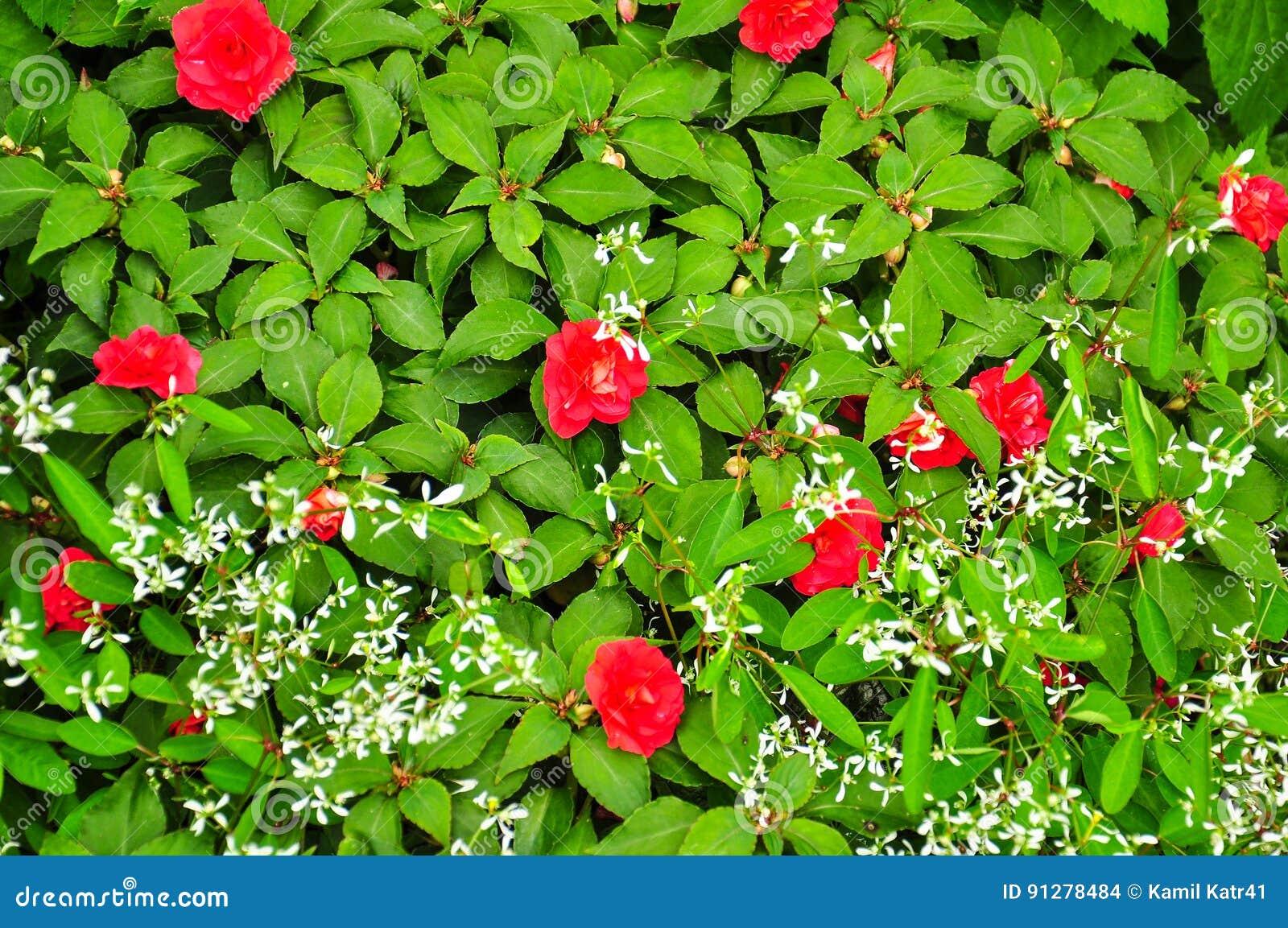 Röda blommor överst av den gröna väggen av sidor