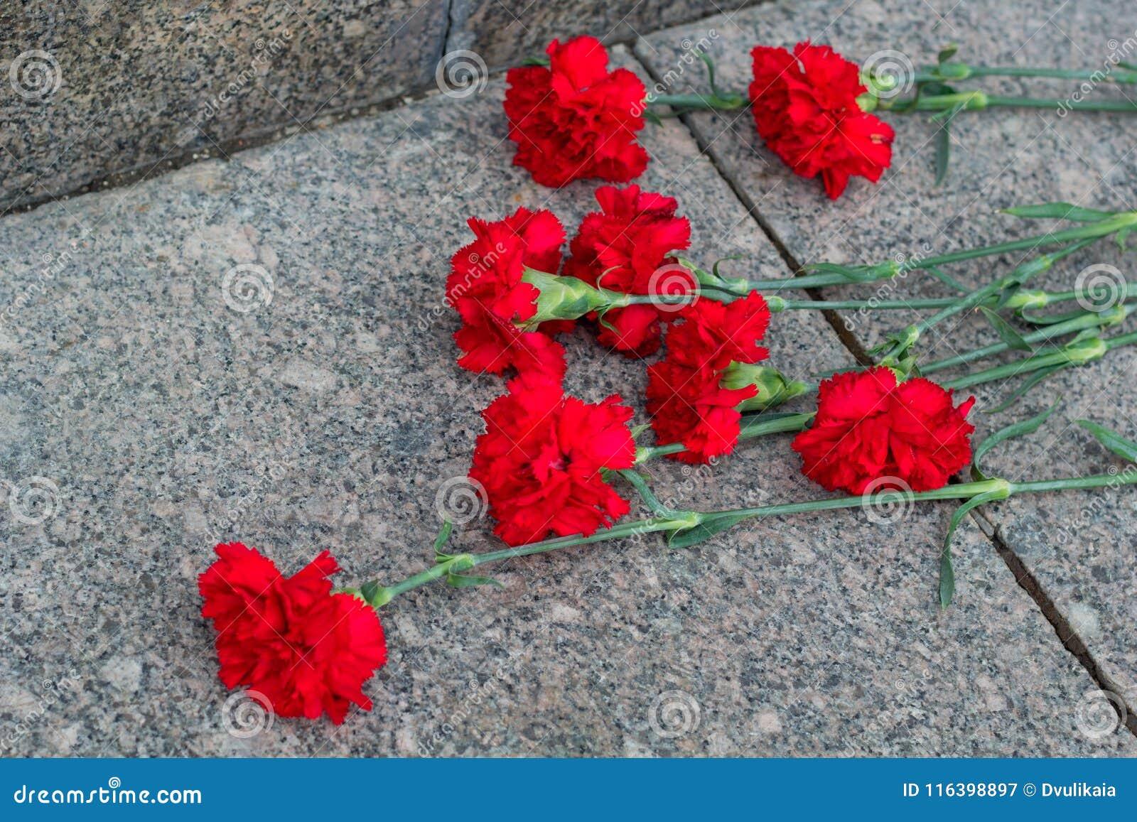 Röda blommor för kryddnejlika
